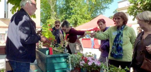 Ce week end Floralies à Gaillac : les photos…