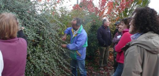 Taille des arbustes d'ornement: Les photos…