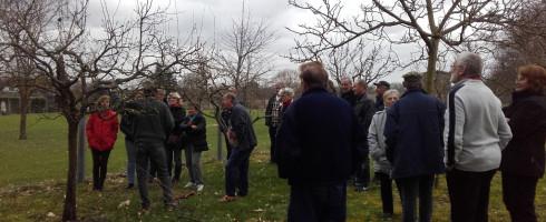 Atelier de taille des arbres fruitiers…Les photos !