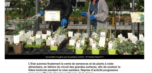 Vente de plants…